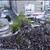 PIERROT、新宿アルタ前での復活発表に7,000 人が驚愕と歓喜!